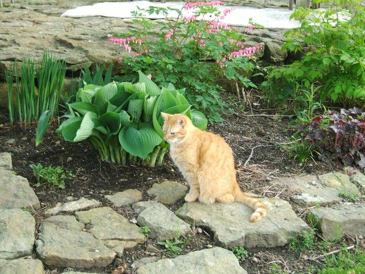 garden patio cat