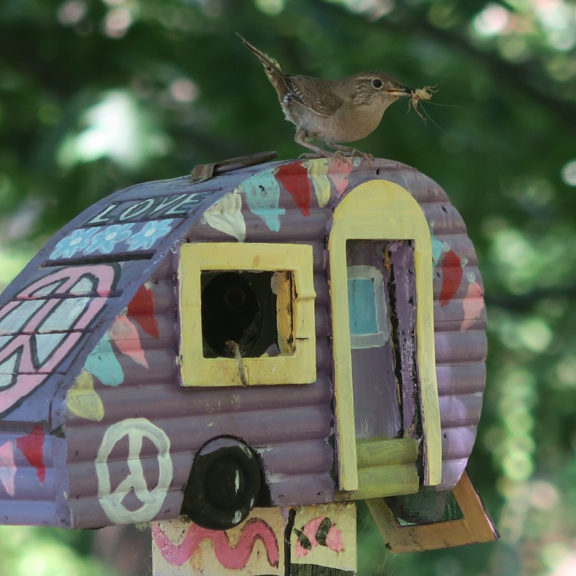 making artistic homes for feathered friends